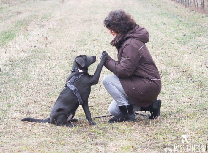 Winterjacke für Hundehalter