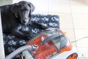 Hund-Thomas-Staubsauger-Loki-Test