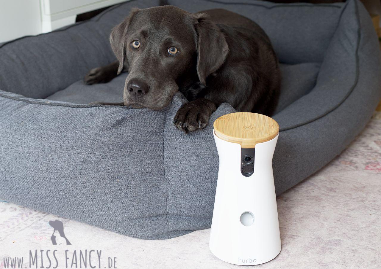 Furbo Hundekamera im Test